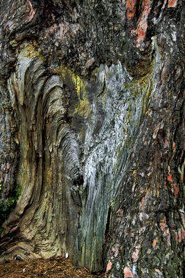 El tronco del árbol
