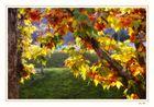 El último otoño