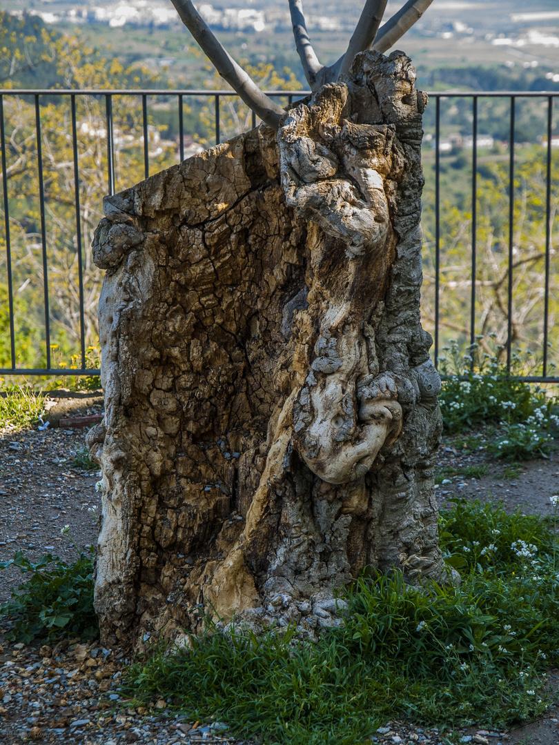 El viejo tronco