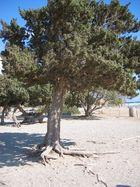 Elafonisi - Kreta
