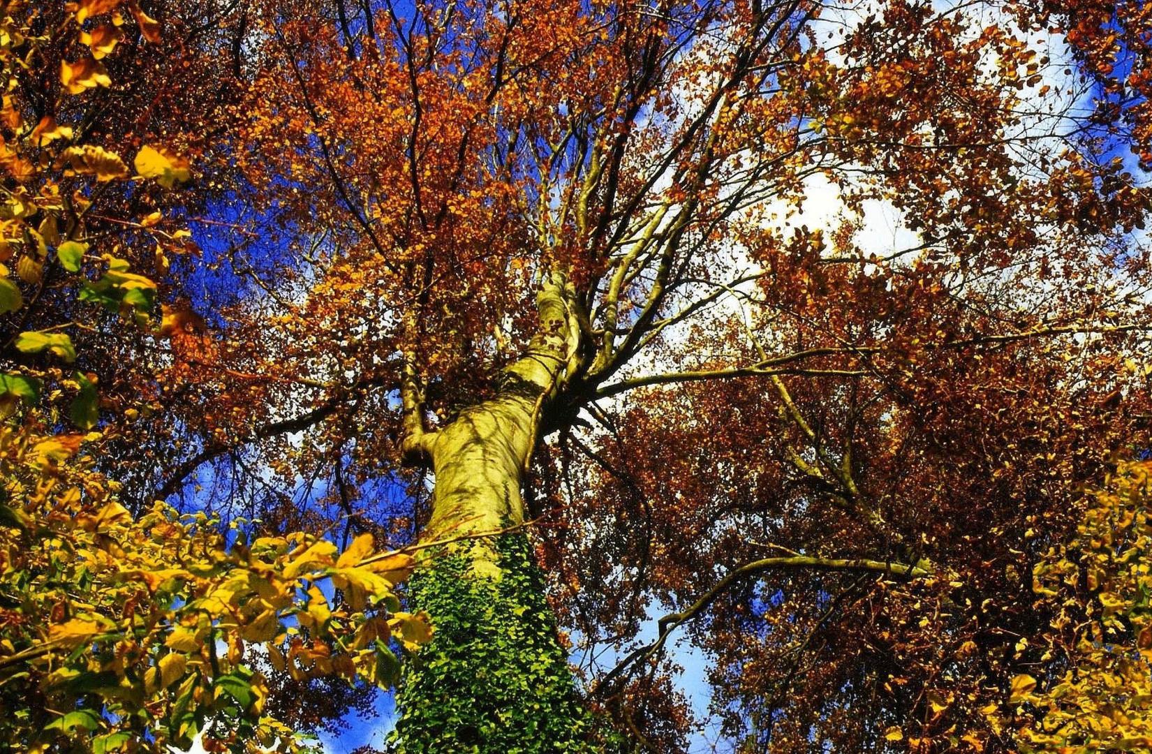 Elan de l'arbre