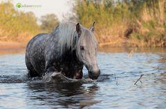 Elb-Pferd