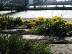 Elbe am Sonntagmorgen