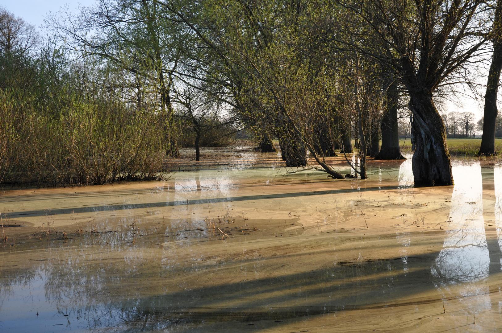 Elbe-Hochwasser