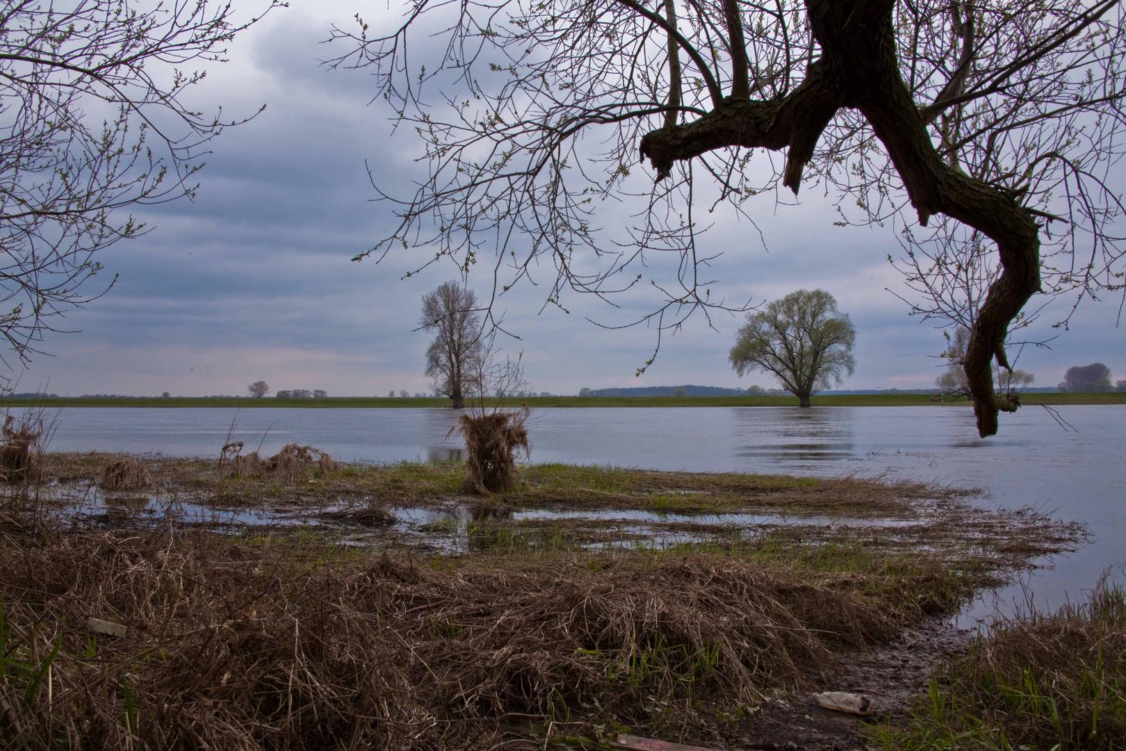 Elbe-Landschaft bei L.-Wittenberg - (2)
