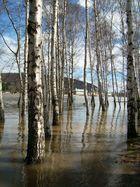 Elbehochwasser 2006