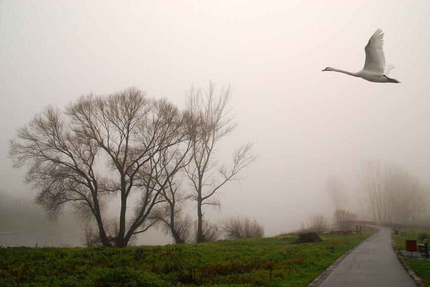 Elblandschaft im Nebel