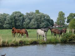 Elblandschaft mit Pferden