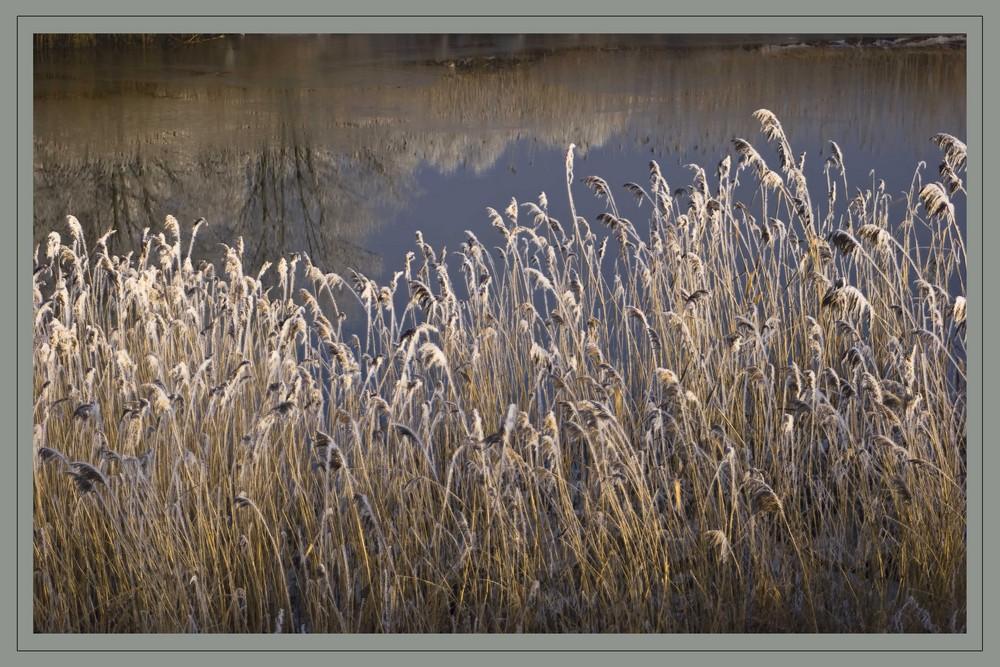 Elbvorland im Winter
