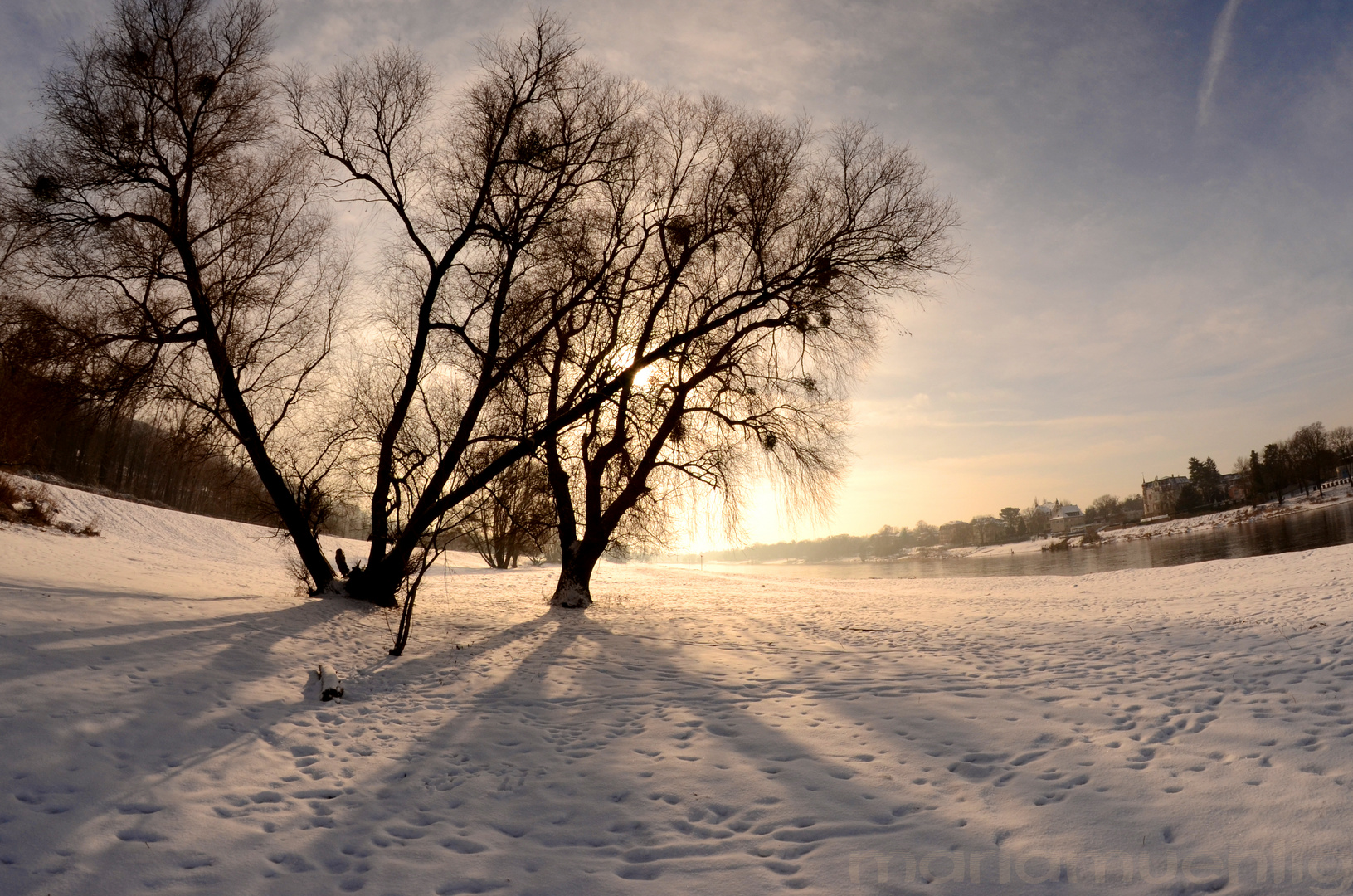 Elbwiesen nahe Blaues Wunder im Winter