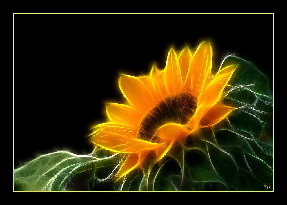 Electrified sunflower