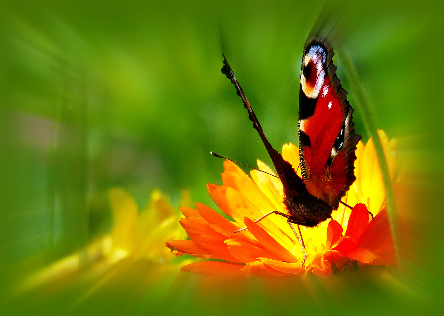 ... electromagnetic force of butterfly