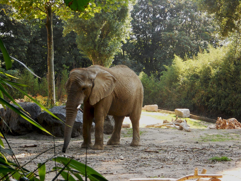 Elefant ;-)