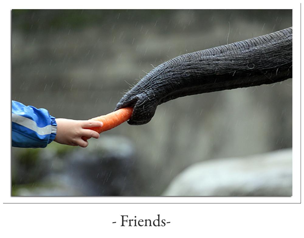 Elefant ´