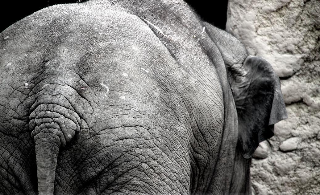 Elefant #