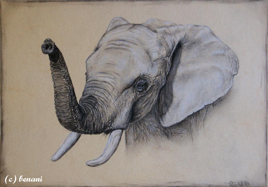elefant foto bild kunstfotografie kultur gem lde. Black Bedroom Furniture Sets. Home Design Ideas