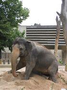 Elefant am Boden