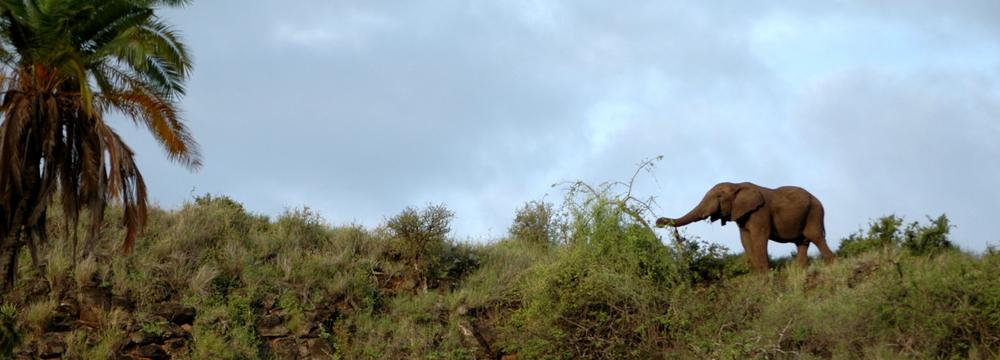 Elefant am Hang