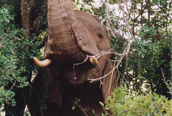 Elefant am Wegesrand