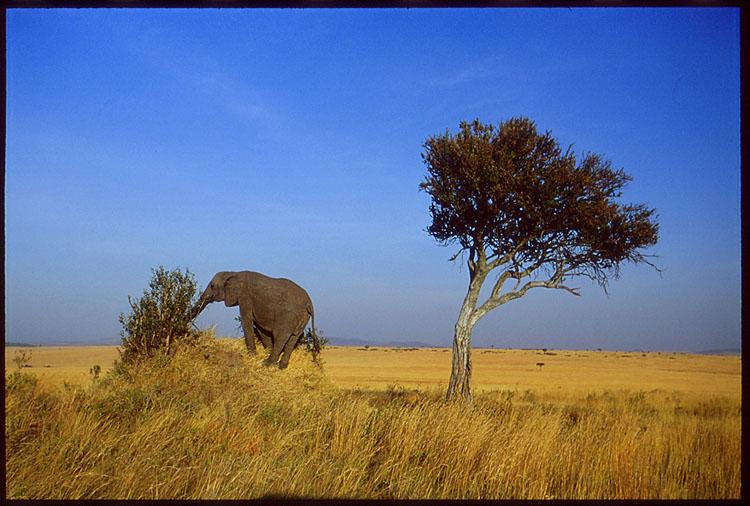 elefant auf hügel
