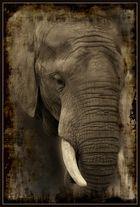 Elefant aus der Serie Wildlife