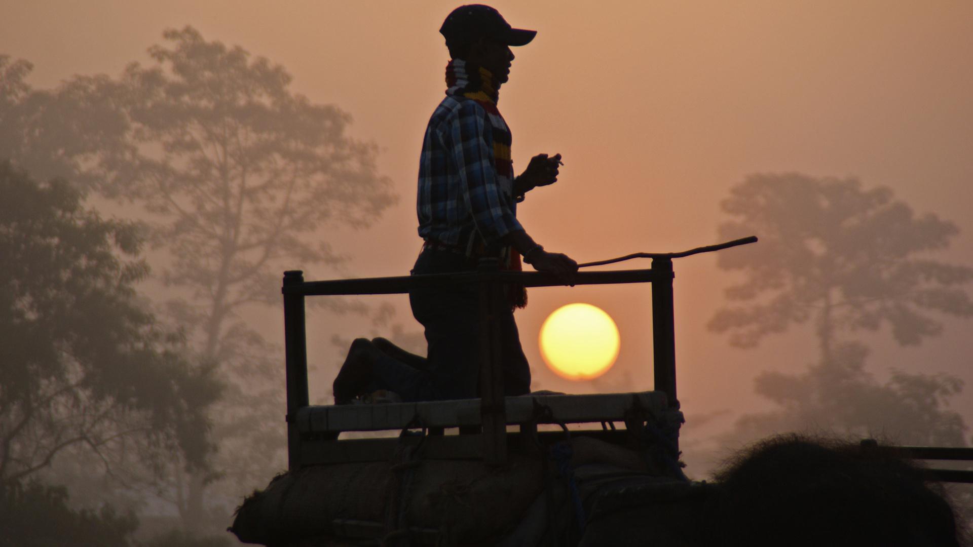 Elefant Driver im ersten Morgenlicht