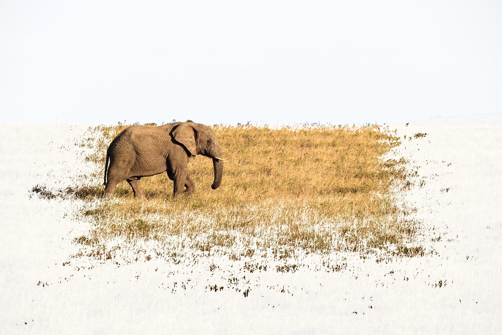 Elefant Einsam