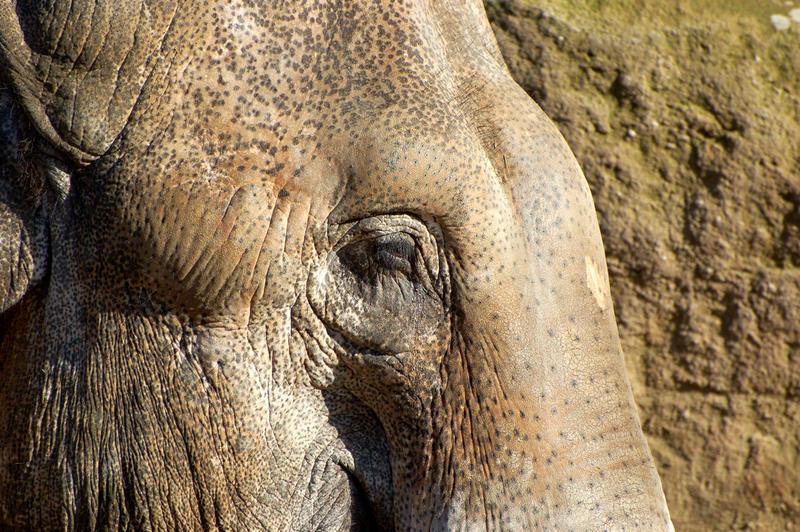 Elefant Emmen