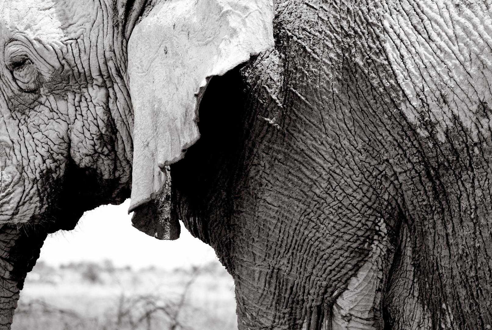 Elefant, Etosha Nationalpark, Namibia