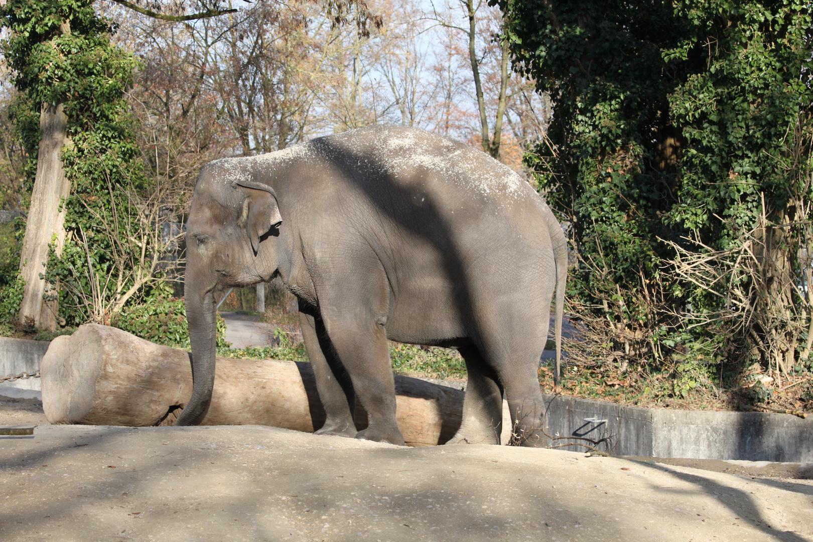 Elefant - Gediegene Langeweile