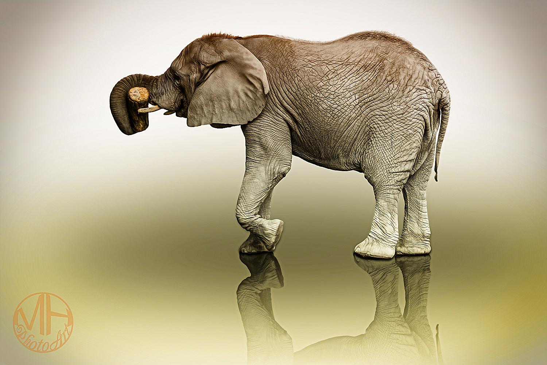 Elefant im Studio