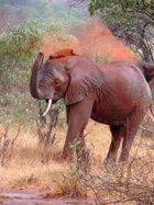 Elefant im Tsavo-Ost Nationalpark