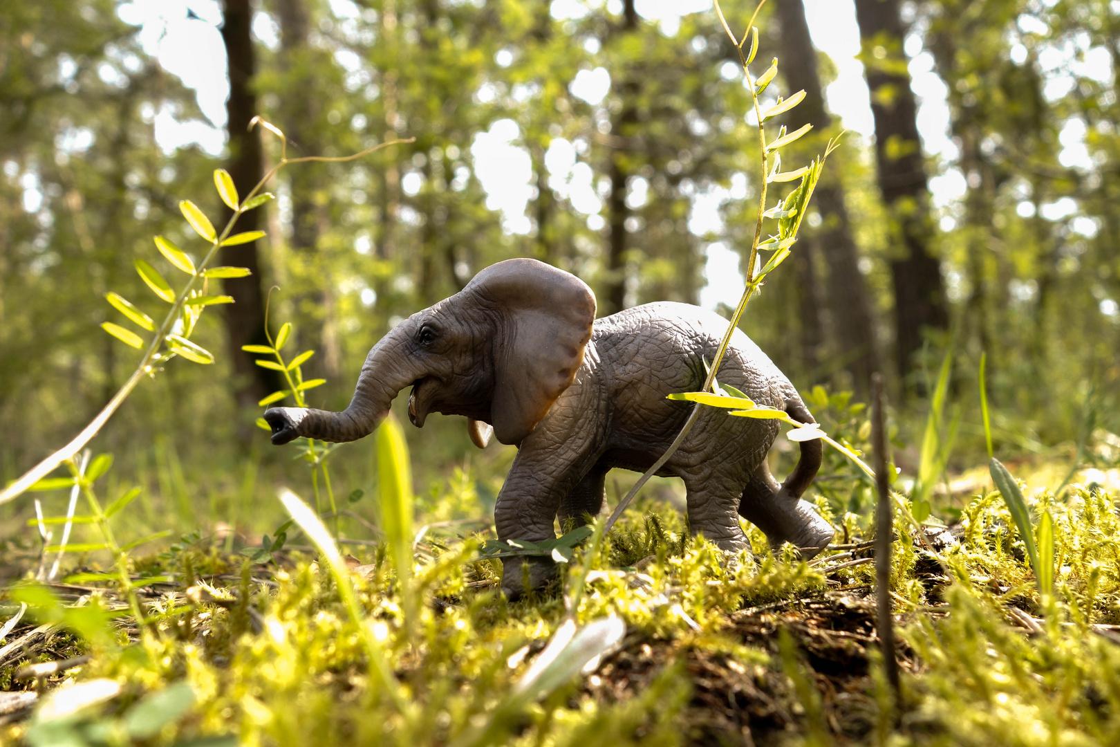 Elefant im Wald?!