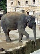 Elefant im Zoo Hannover