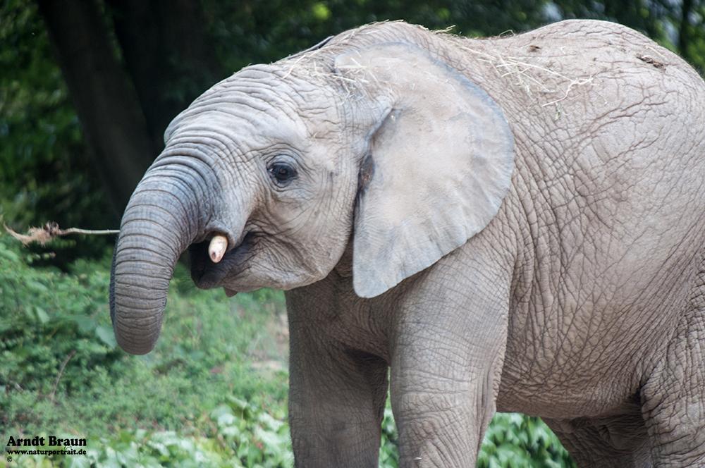 Elefant im Zoo Wuppertal