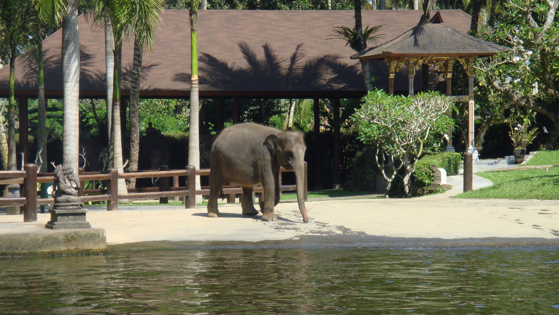 Elefant in Bali