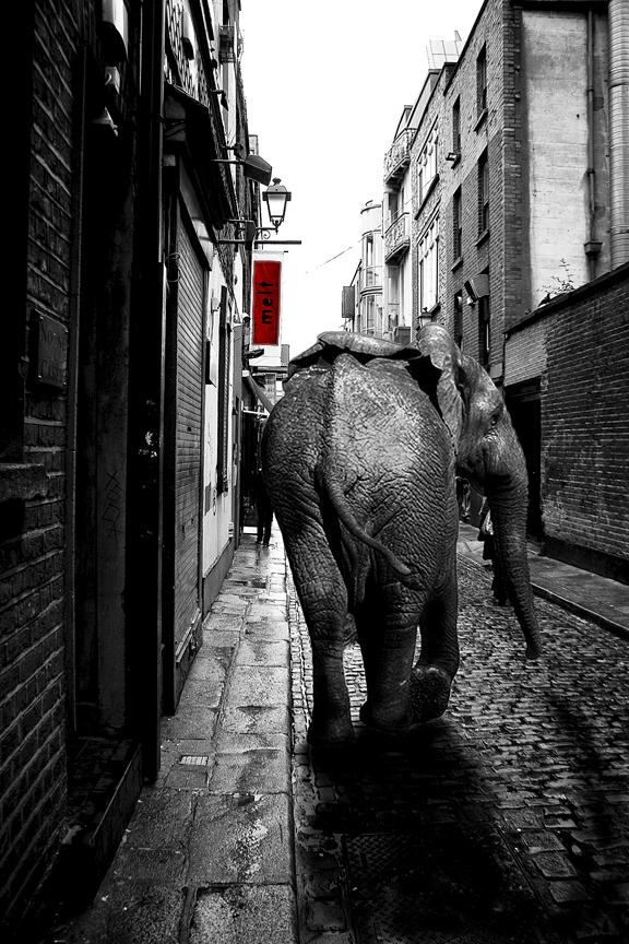 Elefant in Dublin