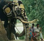 Elefant in Kandy