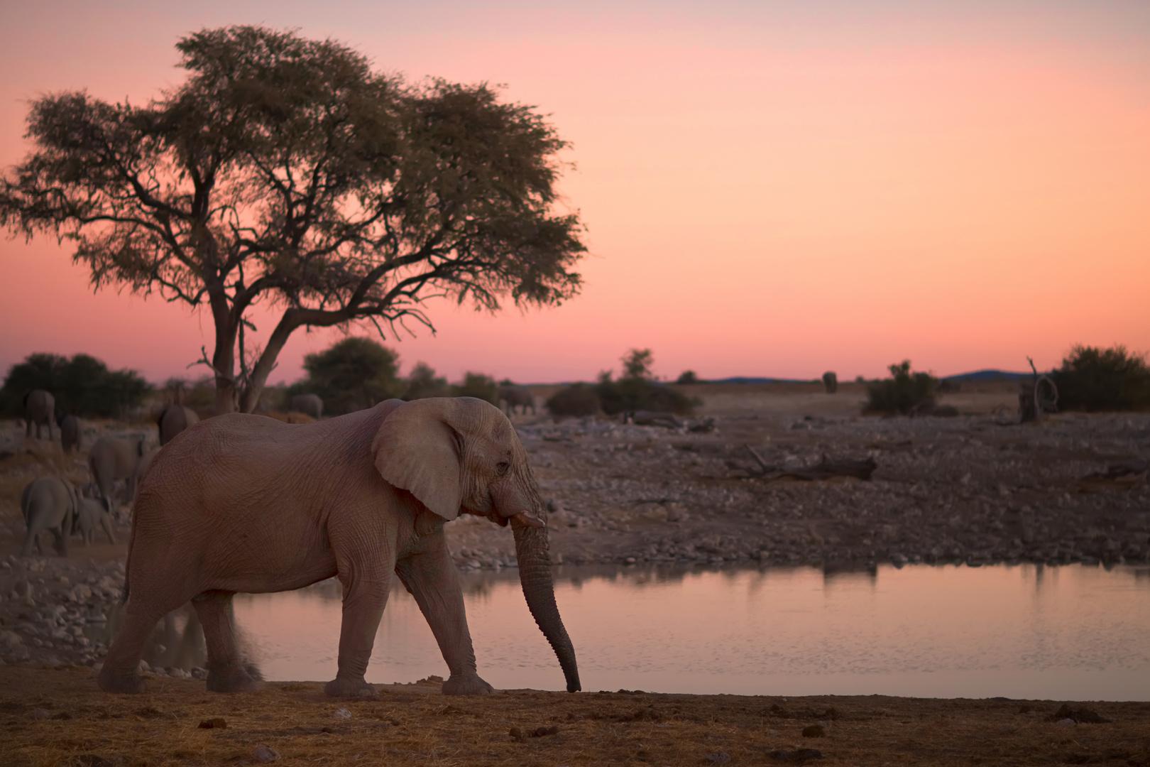 Elefant in Namibia bei Sonnenuntergang