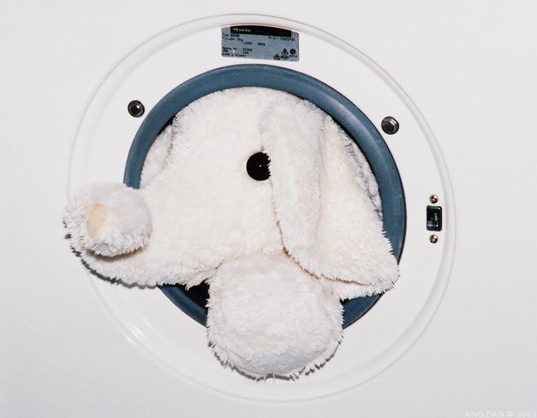 Elefant in Waschmaschine