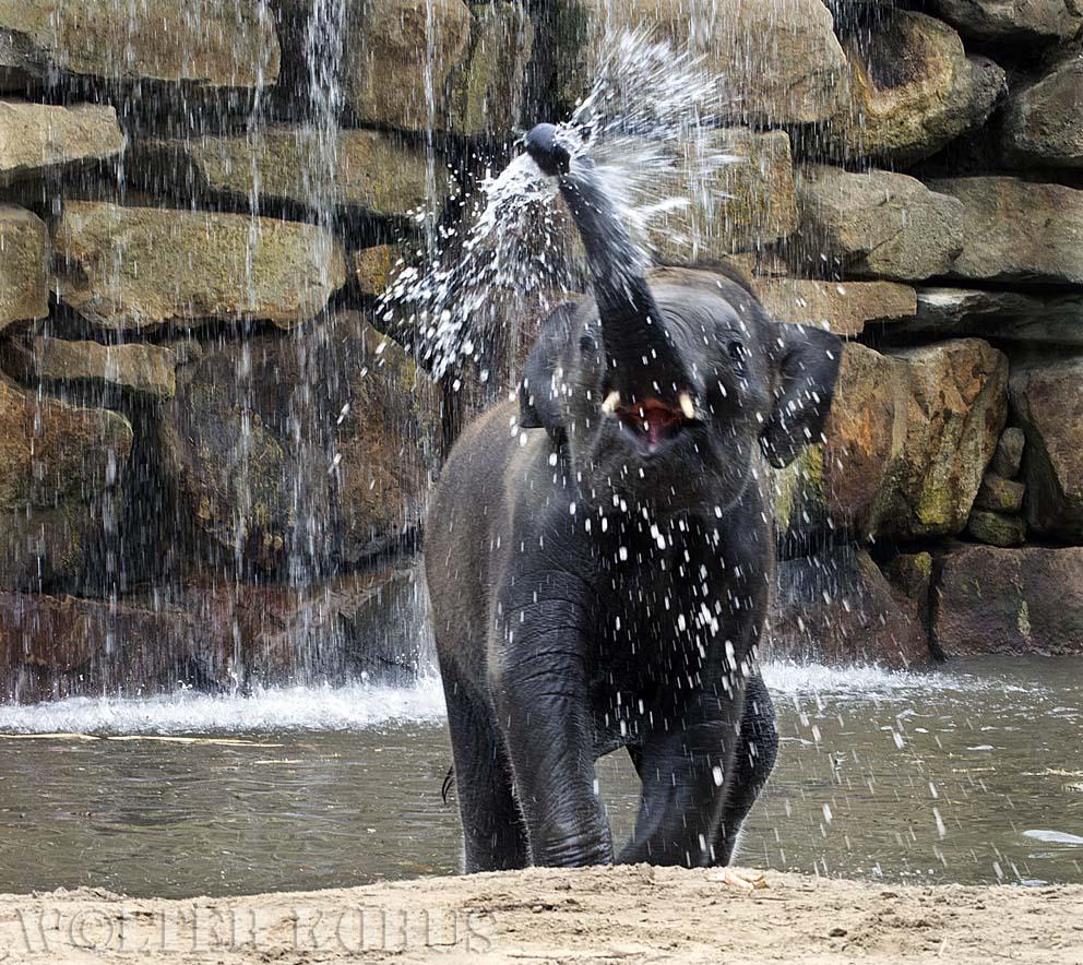 Elefant macht Spaß im Wasser