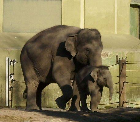Elefant mit Kind im Zoo Hellabrunn bei München