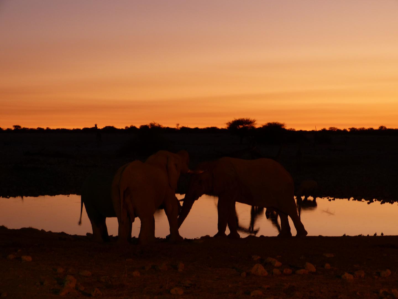 Elefant - Südafrika
