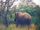 """"""" Elefant """" Südafrika Safari * 3 *"""