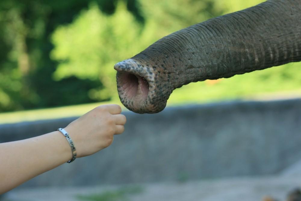 Elefant trifft Mensch