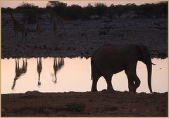 Elefant und DREI an der Traenke ... in Namibia