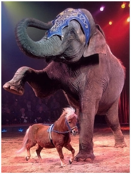 Elefant und Pony