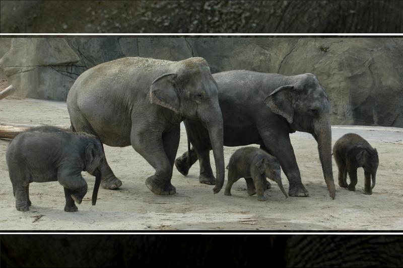 Elefant - Walk