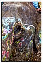 Elefanta de fiesta