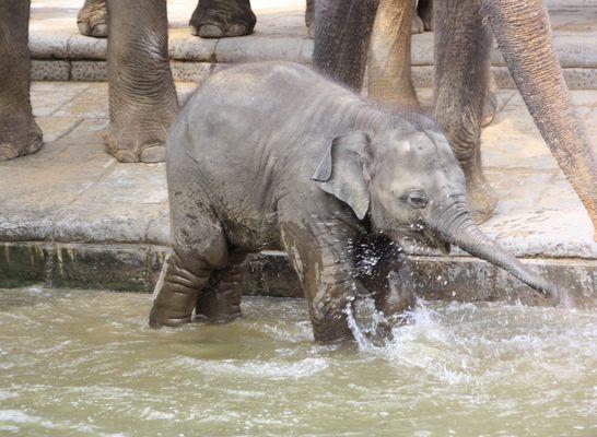Elefantastischer Spaß im Wasser